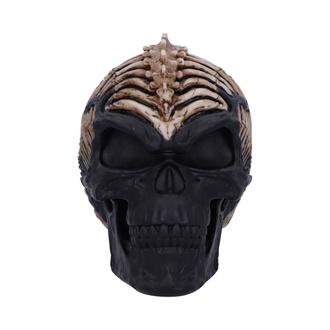 Dekoration Spine Head Skull, NNM